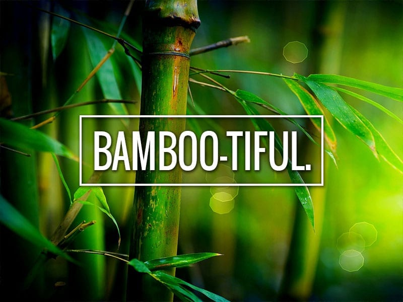 bamboo You're awesome